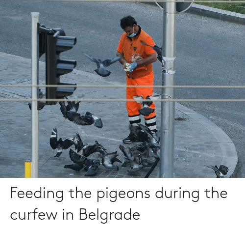 pigeons: Feeding the pigeons during the curfew in Belgrade