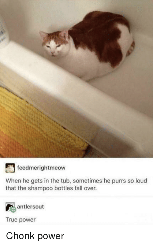 fall over: feedmerightmeow  When he gets in the tub, sometimes he purrs so loud  that the shampoo bottles fall over.  antlersout  True power Chonk power