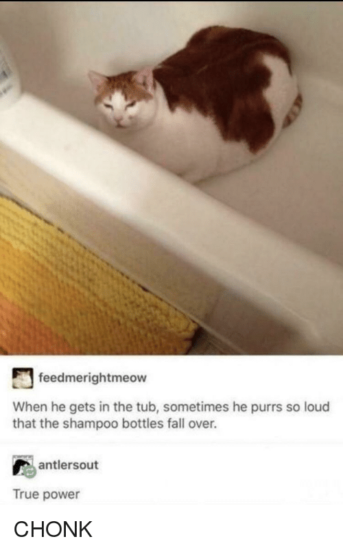 fall over: feedmerightmeow  When he gets in the tub, sometimes he purrs so loud  that the shampoo bottles fall over.  antlersout  True power CHONK
