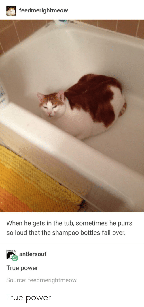 fall over: feedmerightmeow  When he gets in the tub, sometimes he purrs  so loud that the shampoo bottles fall over.  antlersout  True power  Source: feedmerightmeow True power