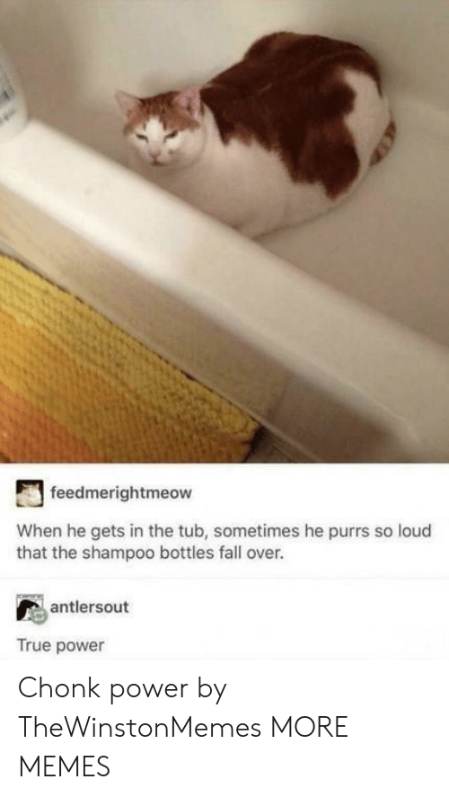 fall over: feedmerightmeow  When he gets in the tub, sometimes he purrs so loud  that the shampoo bottles fall over.  antlersout  True power Chonk power by TheWinstonMemes MORE MEMES