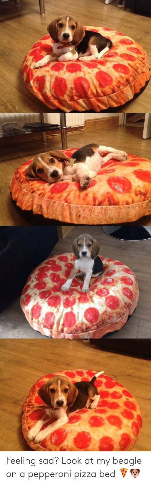 Sad: Feeling sad? Look at my beagle on a pepperoni pizza bed 🍕🐶