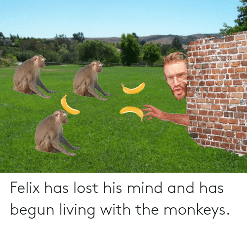 Begun: Felix has lost his mind and has begun living with the monkeys.
