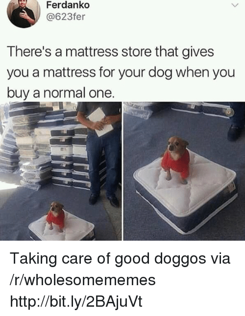 Good, Http, and Mattress: Ferdankd  @623fer  There's a mattress store that gives  you a mattress for your dog when you  buy a normal one Taking care of good doggos via /r/wholesomememes http://bit.ly/2BAjuVt