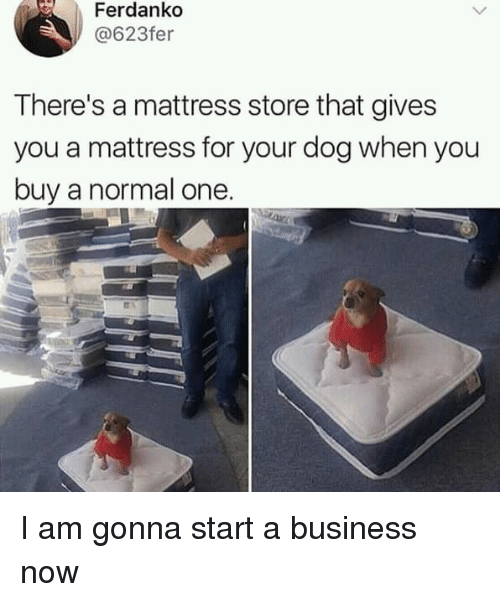 Business, Mattress, and Dog: Ferdankd  @623fer  There's a mattress store that gives  you a mattress for your dog when you  buy a normal one I am gonna start a business now