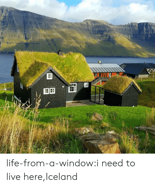 Live Here: FF life-from-a-window:i need to live here,Iceland