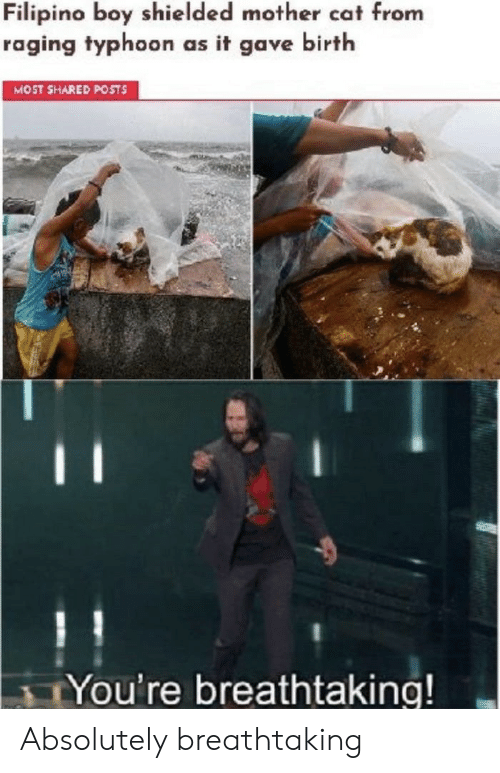 Boy, Cat, and Mother: Filipino boy shielded mother cat from  raging typhoon as it gave birth  MOST SHARED POSTS  TYou're breathtaking! Absolutely breathtaking