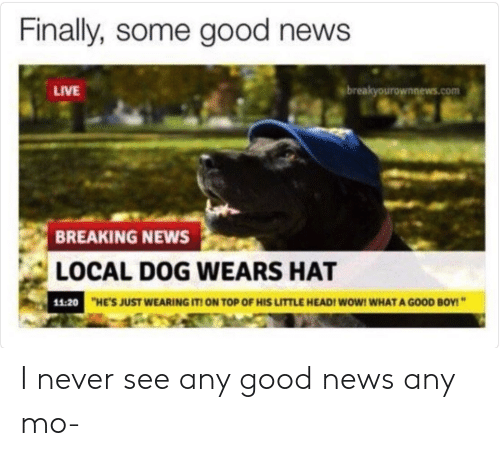 News, Wow, and Breaking News: Finally, some good news  LIVE  breakyourownnews.com  BREAKING NEWS  LOCAL DOG WEARS HAT  11:20  HE'S JUST WEARING IT ON TOP OF HIS LITTLE HEADI WOW! WHAT A GOOD BOY! I never see any good news any mo-