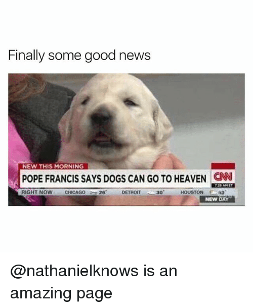 "Detroit, Dogs, and Heaven: Finally some good news  NEW THIS MORNING  POPE FRANCIS SAYS DOGS CAN GO TO HEAVEN CN  725 AMET  CHICAGO26 DETROIT  30""  63  NEW DAY @nathanielknows is an amazing page"
