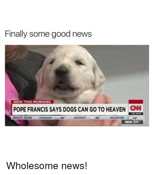 Chicago, Detroit, and Dogs: Finally some good news  NEW THIS MORNING  POPE FRANCIS SAYS DOGS CAN GO TO HEAVEN CN  RIGHT NOW  CHICAGO  -T 26'  DETROIT  '一30'  HOUSTON  E-63  NEW DAY Wholesome news!