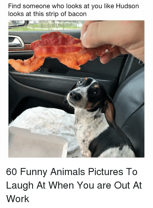 Animals, Funny, and Funny Animals: Find someone who looks at you like Hudson  looks at this strip of bacon 60 Funny Animals Pictures To Laugh At When You are Out At Work