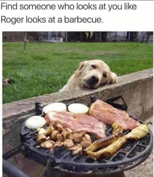 Memes, Roger, and 🤖: Find someone who looks at you like  Roger looks at a barbecue.