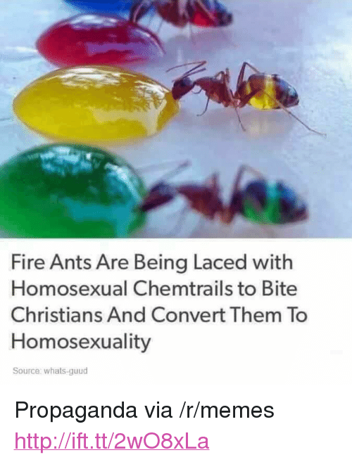 """Fire, Memes, and Http: Fire Ants Are Being Laced with  Homosexual Chemtrails to Bite  Christians And Convert Them To  Homosexuality  Source: whats-guud <p>Propaganda via /r/memes <a href=""""http://ift.tt/2wO8xLa"""">http://ift.tt/2wO8xLa</a></p>"""