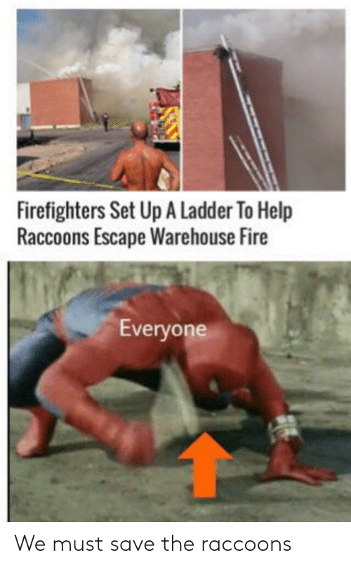 Warehouse: Firefighters Set Up A Ladder To Help  Raccoons Escape Warehouse Fire  Everyone We must save the raccoons