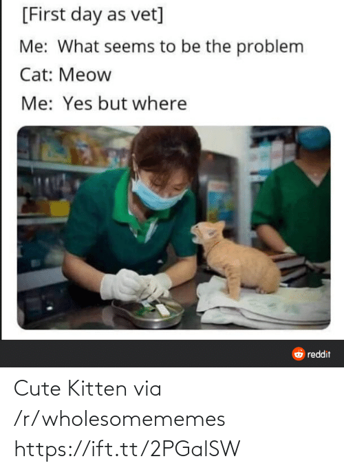 R Wholesomememes: [First day as vet]  Me: What seems to be the problem  Cat: Meow  Me: Yes but where  O reddit Cute Kitten via /r/wholesomememes https://ift.tt/2PGalSW