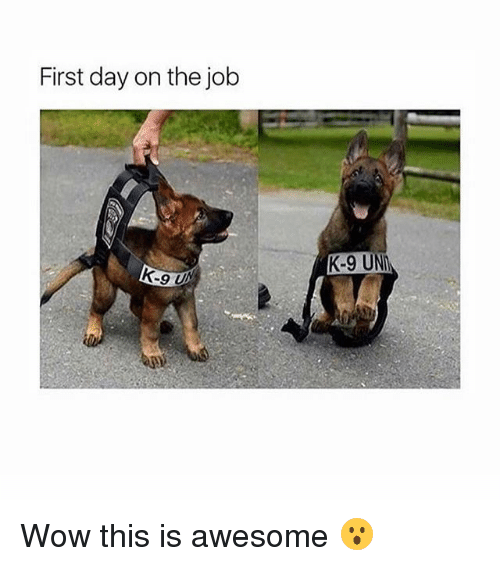 Memes, Wow, and Awesome: First day on the job  K-9 UN Wow this is awesome 😮