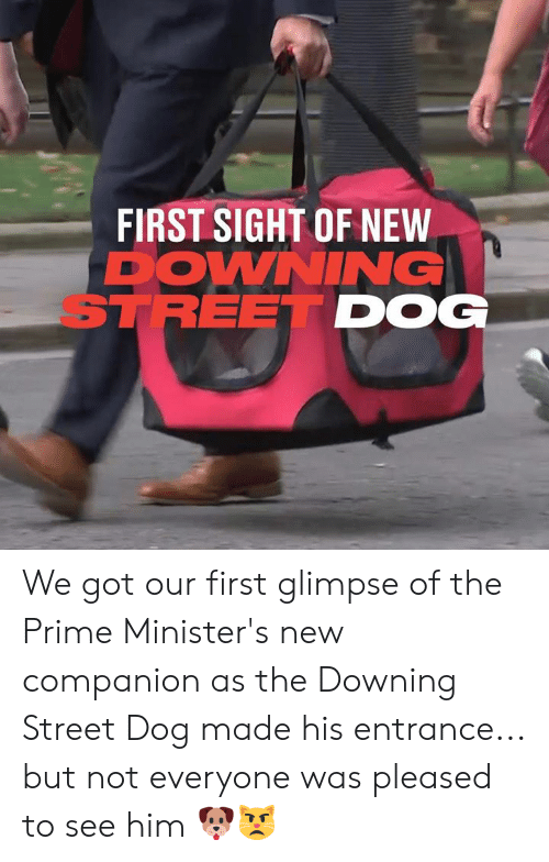 Dank, 🤖, and Got: FIRST SIGHT OF NEW  DOWNING  STREET DOG We got our first glimpse of the Prime Minister's new companion as the Downing Street Dog made his entrance... but not everyone was pleased to see him 🐶😾