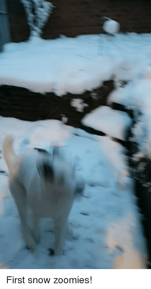 Zoomies, Snow, and First: First snow zoomies!
