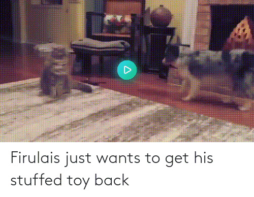 toy: Firulais just wants to get his stuffed toy back