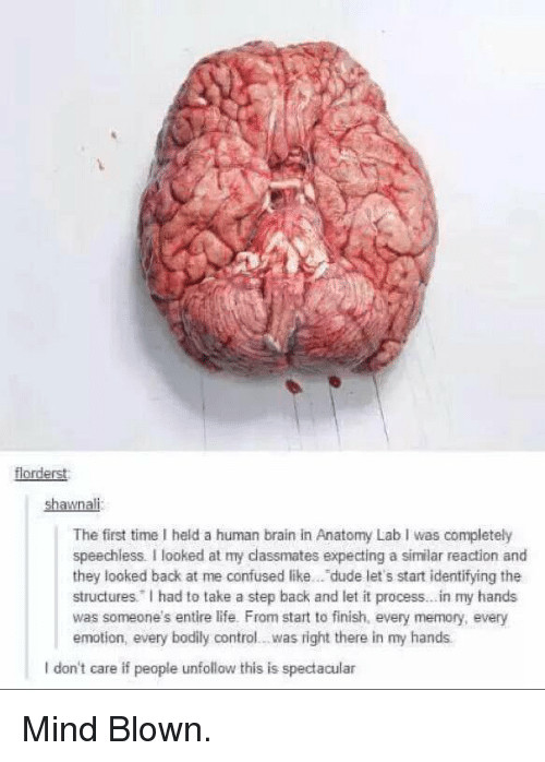 Memes, 🤖, and Human Brain: florderst  shawnali  The first time I held a human brain in Anatomy Lab I was completely  speechless. I looked at my dassmates expecting a similar reaction and  they looked back at me confused like... dude let's start identifying the  structures. had to take a step back and let it process...in my hands  was someone's entire life. From start to finish, every memory, every  emotion, every bodily control...was right there in my hands.  I don't care if peaple unfollow this is spectacular Mind Blown.