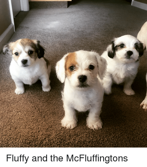 Fluffy, And, and The: Fluffy and the McFluffingtons