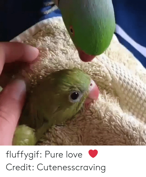 Instagram, Love, and Target: fluffygif:  Pure love  ❤️   Credit: Cutenesscraving