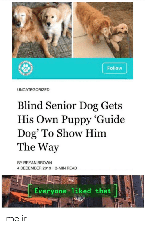 blind: Follow  UNCATEGORIZED  Blind Senior Dog Gets  His Own Puppy 'Guide  Dog' To Show Him  The Way  BY BRYAN BROWN  4 DECEMBER 2019 · 3-MIN READ  Everyone liked that me irl