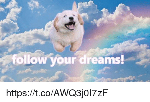 Memes, Dreams, and 🤖: follow your dreams! https://t.co/AWQ3j0I7zF