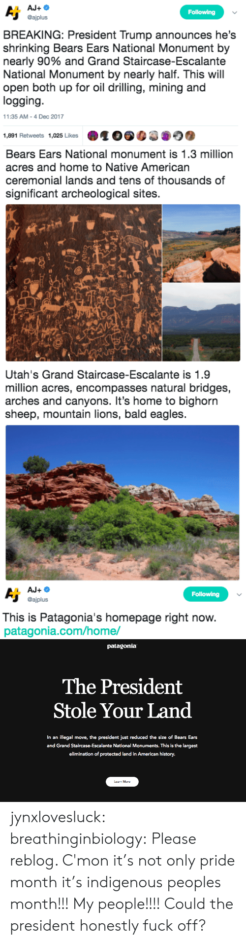 indigenous: Following  @ajplus  BREAKING: President Trump announces he's  shrinking Bears Ears National Monument by  nearly 90% and Grand Staircase-Escalante  National Monument by nearly half. This will  open both up for oil drilling, mining and  logging  11:35 AM-4 Dec 2017  1,891 Retweets 1,025 Likes   Bears Ears National monument is 1.3 million  acres and home to Native American  ceremonial lands and tens of thousands of  significant archeological sites.  sh   Utah's Grand Staircase-Escalante is 1.9  million acres, encompasses natural bridges,  arches and canyons. It's home to bighorn  sheep, mountain lions, bald eagles   Following  @ajplus  This is Patagonia's homepage right now  patagonia.com/home/   patagonia  The President  Stole Your Land  In an illegal move, the president just reduced the size of Bears Ears  and Grand Staircase-Escalante National Monuments. This is the largest  elimination of protected land in American history.  Learn More jynxlovesluck:  breathinginbiology: Please reblog.   C'mon it's not only pride month it's indigenous peoples month!!! My people!!!! Could the president honestly fuck off?