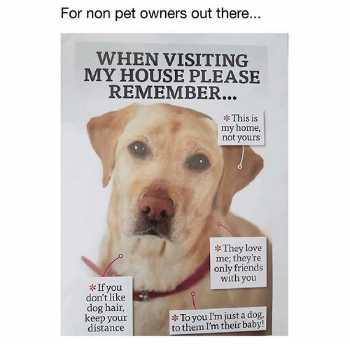 Friends, Love, and Memes: For non pet owners out there.  WHEN VISITING  MY HOUSE PLEASE  REMEMBER...  This is  my home,  not yours  They love  me; they're  only friends  with you  If you  don't like  dog hair,  keep your  distance  To you I'm just a dog,  to them I'm their baby!