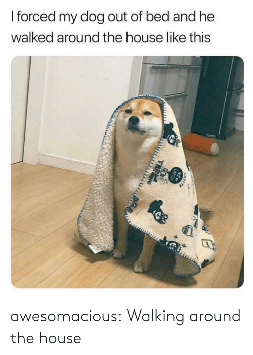 Tumblr, Blog, and House: forced my dog out of bed and he  walked around the house like this awesomacious:  Walking around the house