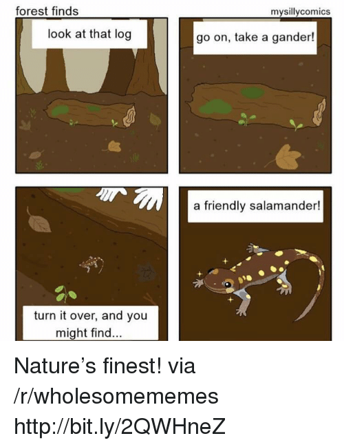 gander: forest finds  mysillycomics  look at that log  go on, take a gander!  a friendly salamander  turn it over, and you  might find Nature's finest! via /r/wholesomememes http://bit.ly/2QWHneZ