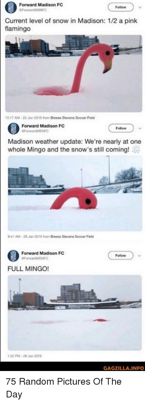 random pictures: Forward Madison FC  Follow  urrent level of snow in Madison: 1/2 a pink  flamingo  0-17 AM-25 Jan 2019 from Breese Stevens Soccer Field  Forward Madison FC  Follow  Madison weather update: We're nearly at one  whole Mingo and the snow's still coming!  41 AM-28 Jan 2019 from Breese Stevens Soccer Field  Forward Madison FC  Follow  FULL MINGO!  32 M-28Jan 2019  GAGZILLA.INFO 75 Random Pictures Of The Day