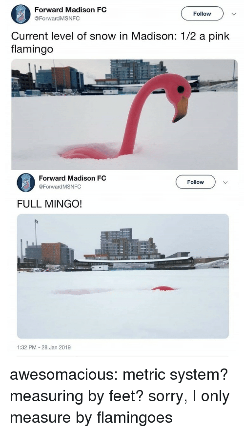 Sorry, Tumblr, and Blog: Forward Madison FC  @ForwardMSNFC  Follow  Current level of snow in Madison: 1/2 a pink  flamingo  Forward Madison FC  @Forward MSNFC  Follow  FULL MINGO!  1:32 PM 28 Jan 2019 awesomacious:  metric system? measuring by feet? sorry, I only measure by flamingoes