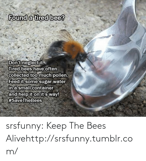 Some Sugar: Found a tired bee?  Don't neglect it.  Tired bees have often  collected too much pollen.  Feed it some sugar water  în a small container  and help it on it's way!  srsfunny:  Keep The Bees Alivehttp://srsfunny.tumblr.com/