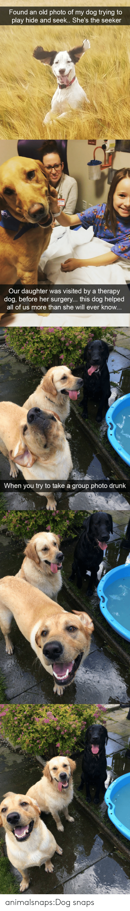 Drunk, Target, and Tumblr: Found an old photo of mv doa trving tO  play hide and seek.. She's the seeker   Our daughter was visited by a therapy  dog, before her surgery... this dog helped  all of us more than she will ever know   When you try to take a group photo drunk animalsnaps:Dog snaps