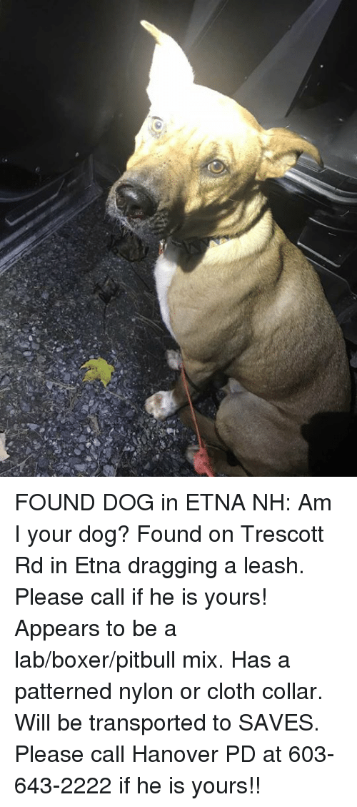Memes, Pitbull, and Boxer: FOUND DOG in ETNA NH:  Am I your dog? Found on Trescott Rd in Etna dragging a leash. Please call if he is yours! Appears to be a lab/boxer/pitbull mix. Has a patterned nylon or cloth collar. Will be transported to SAVES. Please call Hanover PD at 603-643-2222 if he is yours!!