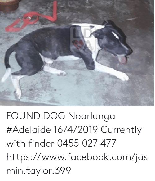 FOUND DOG Noarlunga #Adelaide 1642019 Currently With Finder