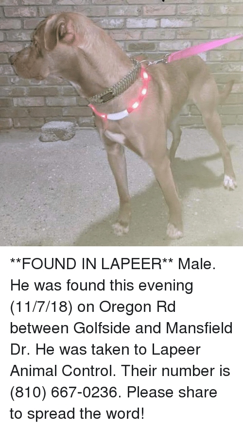 Memes, Taken, and Control: **FOUND IN LAPEER** Male. He was found this evening (11/7/18) on Oregon Rd between Golfside and Mansfield Dr. He was taken to Lapeer Animal Control. Their number is (810) 667-0236. Please share to spread the word!