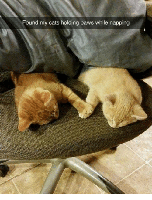 napping: Found my cats holding paws while napping