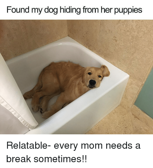 Funny, Puppies, and Break: Found my dog hiding from her puppies Relatable- every mom needs a break sometimes!!