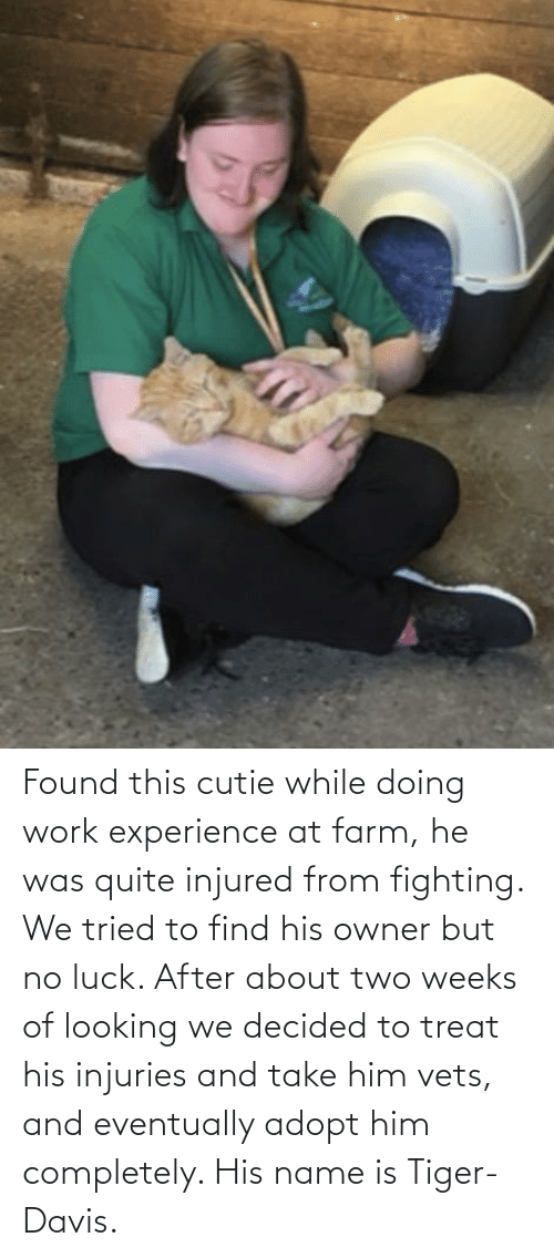 no luck: Found this cutie while doing work experience at farm, he was quite injured from fighting. We tried to find his owner but no luck. After about two weeks of looking we decided to treat his injuries and take him vets, and eventually adopt him completely. His name is Tiger-Davis.