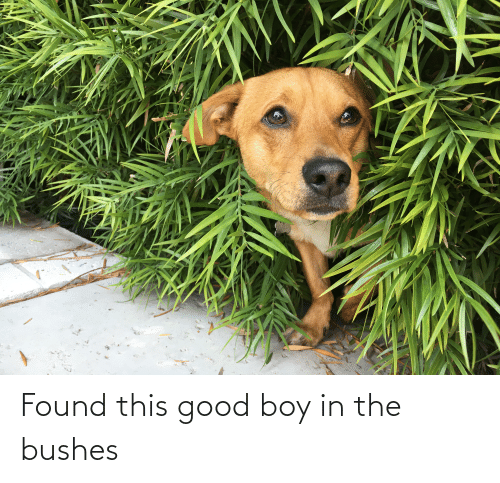 Good: Found this good boy in the bushes