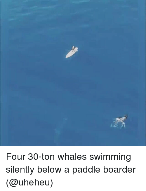boarder: Four 30-ton whales swimming silently below a paddle boarder (@uheheu)