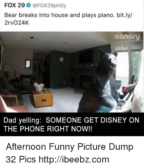 Dad, Disney, and Funny: FOX 29 @FOX29philly  Bear breaks into house and plays piano. bit.ly/  2rvO24K  canaru  Dad yelling: SOMEONE GET DISNEY ON  THE PHONE RIGHT NOW!! Afternoon Funny Picture Dump 32 Pics http://ibeebz.com