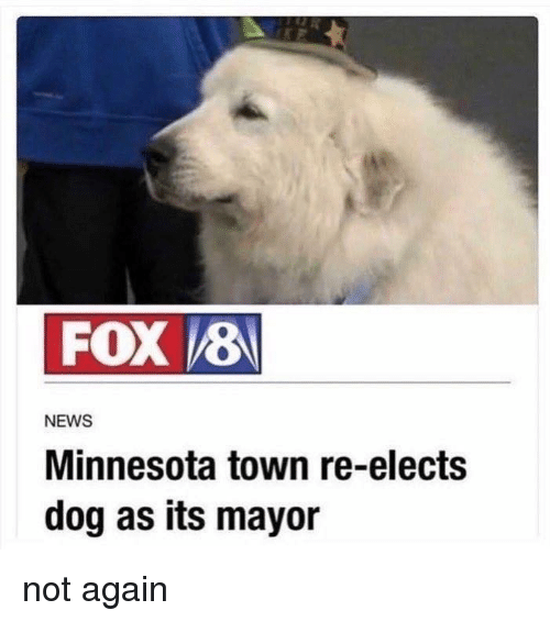 Memes, News, and Minnesota: FOX 8  NEWS  Minnesota town re-elects  dog as its mayor not again