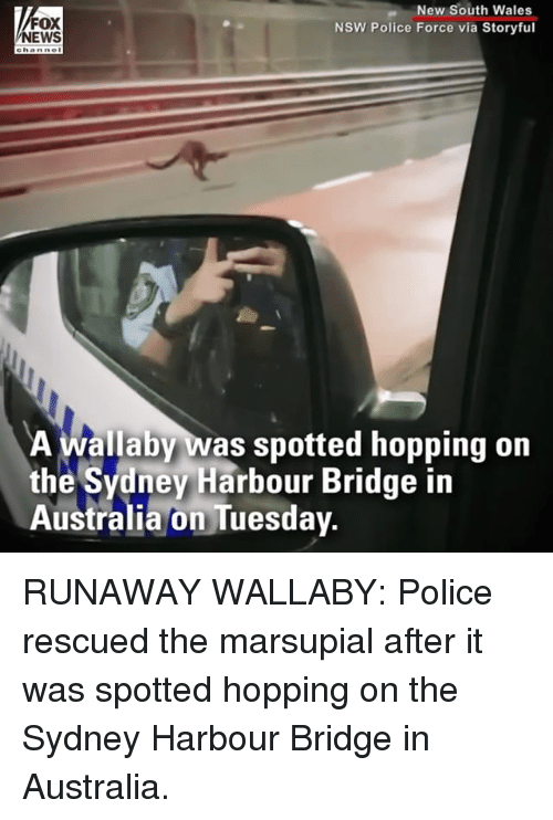 Memes, Police, and Australia: FOX  EWS  New South Wales  NSW Police Force via Storyful  e hanne  A wallaby was spotted hopping on  the Sydney Harbour Bridge in  Australia on Tuesday. RUNAWAY WALLABY: Police rescued the marsupial after it was spotted hopping on the Sydney Harbour Bridge in Australia.