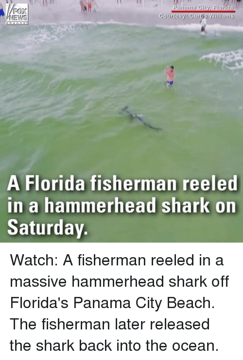 Memes, News, and Shark: FOX  NEWS  Courtesy Curtis Williams  A Florida fisherman reeled  in a hammerhead shark on  Saturday Watch: A fisherman reeled in a massive hammerhead shark off Florida's Panama City Beach. The fisherman later released the shark back into the ocean.