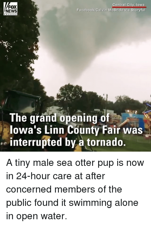 Being Alone, Facebook, and Memes: FOX  NEWS  Facebook/Calvin McB  The grand opening of  lowa's Linn County Fair was  interrupted by a tornado. A tiny male sea otter pup is now in 24-hour care at after concerned members of the public found it swimming alone in open water.