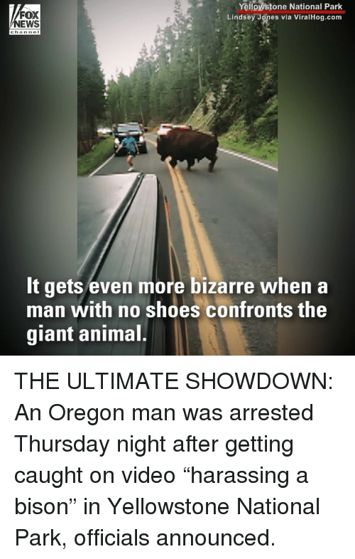 "Memes, News, and Shoes: FOX  NEWS  Yellowstone National Park  Lindsey Jones via ViralHog.com  chan nol  It gets even more bizarre when a  man with no shoes confronts the  giant animal THE ULTIMATE SHOWDOWN: An Oregon man was arrested Thursday night after getting caught on video ""harassing a bison"" in Yellowstone National Park, officials announced."